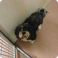 Adopt A Pet :: Torrance - North Ogden, UT