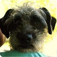 Adopt A Pet :: Tybalt - Mission Viejo, CA