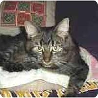 Adopt A Pet :: Ciera - Arlington, VA