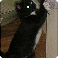 Adopt A Pet :: Pippi - Brea, CA