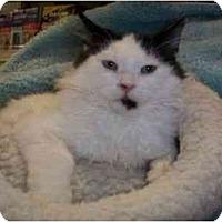 Adopt A Pet :: Randy - Reston, VA