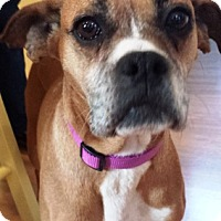 Adopt A Pet :: Julie - Turnersville, NJ