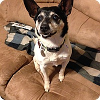Adopt A Pet :: Jericho - Huntsville, AL