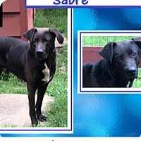 Adopt A Pet :: Sabre - East Hartford, CT