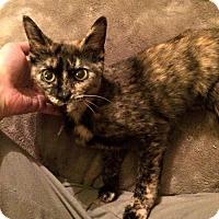 Adopt A Pet :: Stormy - Hamilton, ON