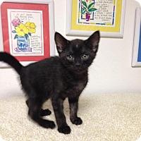 Adopt A Pet :: Samson - Scottsdale, AZ