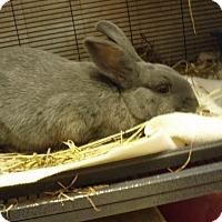 Adopt A Pet :: Bobby - Quilcene, WA