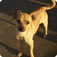 Adopt A Pet :: Wags - Winters, CA