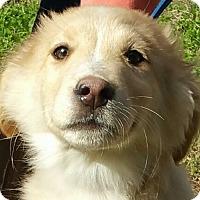 Adopt A Pet :: Ziggy - Hagerstown, MD