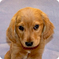 Adopt A Pet :: 16-d05-014 Elias - Fayetteville, TN