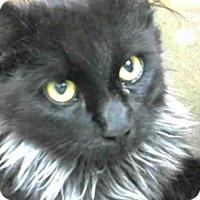 Adopt A Pet :: URGENT on 5/18 at DEVORE - San Bernardino, CA