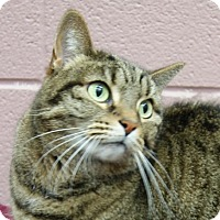 Adopt A Pet :: Lilly T - Monroe, MI