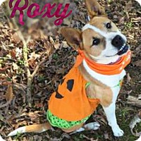 Adopt A Pet :: Roxy - Roanoke, VA