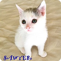 Adopt A Pet :: SAWYER - Mooresville, NC