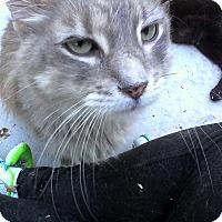 Adopt A Pet :: Finn - Medford, NY
