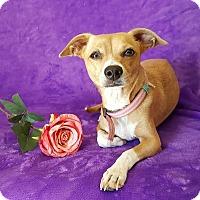 Adopt A Pet :: Gracie - Yucaipa, CA