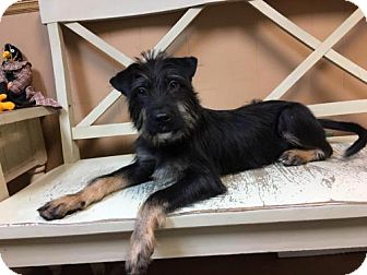 Terrier (Unknown Type, Medium) Mix Dog for adoption in Wilmington, Delaware - Owen