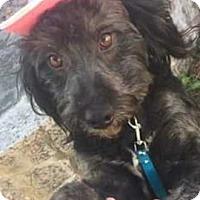 Adopt A Pet :: Maggie - E. Greenwhich, RI