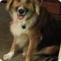 Adopt A Pet :: Ruby (Courtesy Post) - Menifee, CA