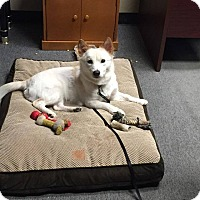 Adopt A Pet :: SNOW- Korean rescue - Lucknow, ON
