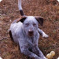 Adopt A Pet :: frank - Staunton, VA