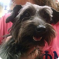 Adopt A Pet :: Orion - Ringoes, NJ