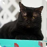 Adopt A Pet :: Biggie - Tucson, AZ