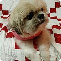 Adopt A Pet :: Grandma Turner - Urbana, OH