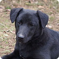 Adopt A Pet :: Arrow - Westport, CT