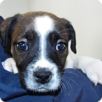 Adopt A Pet :: Aphrodite - Grants Pass, OR