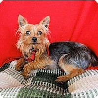 Adopt A Pet :: Huck - Mooy, AL
