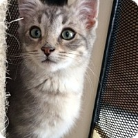 Adopt A Pet :: Chase - Long Beach, NY