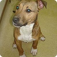 Adopt A Pet :: Mal - Stilwell, OK