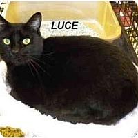 Adopt A Pet :: Luce - Jacksonville, FL