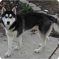 Adopt A Pet :: Kiro - Belleville, MI