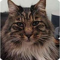 Adopt A Pet :: Aristotle - Davis, CA