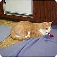 Adopt A Pet :: Haven - Secaucus, NJ