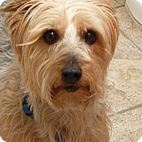 Adopt A Pet :: Hobbes - Skokie, IL
