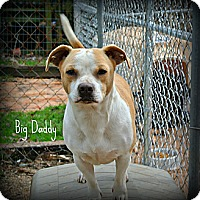 Adopt A Pet :: Big Daddy - Vancleave, MS