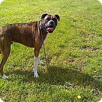 Adopt A Pet :: Baxter - Winchester, VA