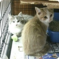 Adopt A Pet :: Rafaela and Norman - Whitestone, NY