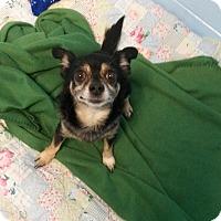 Adopt A Pet :: Poncho - Muskegon, MI