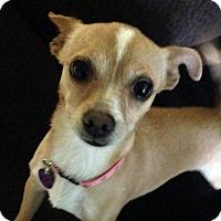 Adopt A Pet :: Boop - La Quinta, CA
