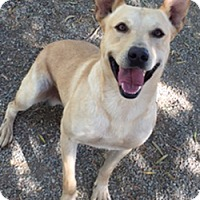 Adopt A Pet :: Rex - Patterson, CA