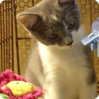 Adopt A Pet :: ELIAS - Acme, PA