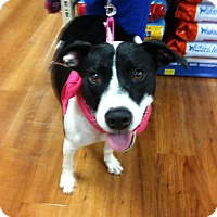 Adopt A Pet :: Bobbi - Asheboro, NC