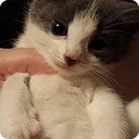 Adopt A Pet :: Twizzle - Putnam, CT