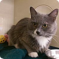 Adopt A Pet :: Sapphire - Berkeley Hts, NJ