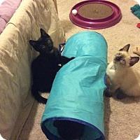 Adopt A Pet :: Peyton & Cam - Scottsdale, AZ