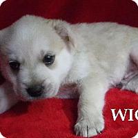 Adopt A Pet :: Wick - Batesville, AR